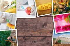 Genetic modification, science and technology in agriculturre, ph. Genetic modification, science and technology in agriculture, photo collage on wooden background stock images