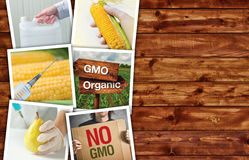 Genetic modification, science and technology in agriculturre, ph. Genetic modification, science and technology in agriculture, photo collage on wooden background royalty free stock photo
