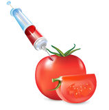 Genetic modification of vegetable; tomato and syri Royalty Free Stock Image