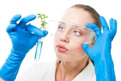 Genetic modified plant stock image