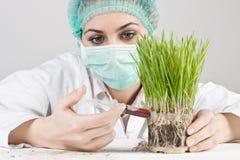 Genetic modified plant Stock Photos