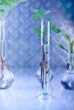 genetic modify plants Стоковые Фото