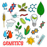 Genetic technologies in agriculture sketches Royalty Free Stock Images
