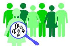 Genetica di popolazione Fotografia Stock