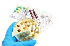 genetically доработанные грибки Стоковое Изображение RF