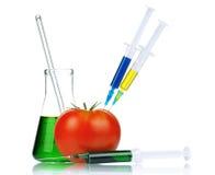 genetically доработанный организм стоковые фото