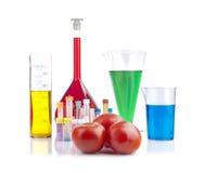 Genetically доработанный организм - зрелые томаты и стеклоизделие лаборатории стоковые фотографии rf