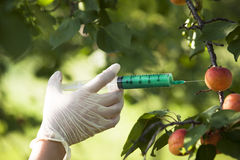 Genetically modified fruit. Genetically modified food. Genetic engineering Royalty Free Stock Photography