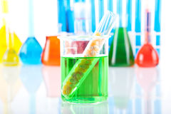 Genetically modified organism. In laboratory table Royalty Free Stock Images