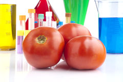 Genetically modified organism Royalty Free Stock Images