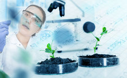 Genetically modified plant tested in petri dish . Royalty Free Stock Photography