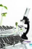 Genetically modified plant tested in test tube . Royalty Free Stock Photo