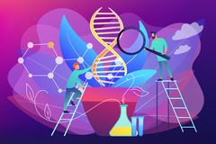 Genetically modified plants concept vector illustration. Scientists with magnifier looking at huge DNA in pot. Genetically modified plants, GM crops and biotech stock illustration