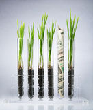 Genetically modified plants costs Royalty Free Stock Photography