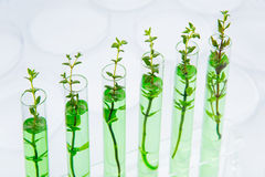 Genetically modified plants Royalty Free Stock Images