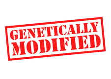 GENETICALLY MODIFIED. Red Rubber Stamp over a white background Royalty Free Stock Photos