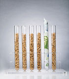 Genetically modified seeds costs Stock Image