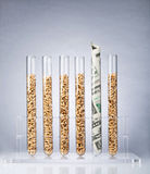 Genetically modified seeds costs Royalty Free Stock Photography