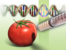 Genetically modified tomato. And dna sequence. Digital illustration Royalty Free Stock Photos