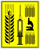 Genetically Modified Wheat Stock Image