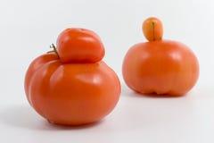 Genetico modifichi Fotografia Stock
