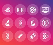 Genetics icons set, dna, genetic modification. Genetics icons set, dna chains, genetic modification and research Royalty Free Stock Photography