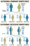 genetik stock abbildung