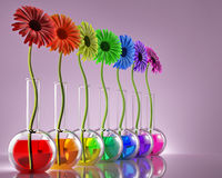 Genetik und Blumenzucht stockbild