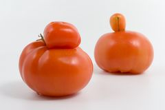 Genetisch ändern Sie stockfotografie
