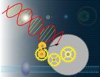 Genetische biologie Royalty-vrije Stock Afbeelding