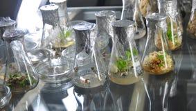 Genetische biologie Royalty-vrije Stock Fotografie