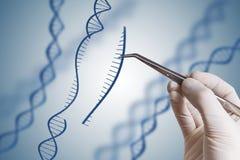 Genetische biologie, GMO en het concept van de Genmanipulatie De hand neemt opeenvolging van DNA op royalty-vrije stock afbeeldingen