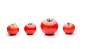 Genetische wijziging op Tomaten Royalty-vrije Stock Afbeelding