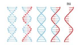 Genetischer Code der Vektor DNA-RNS-Molekülschneckenspirale stock abbildung