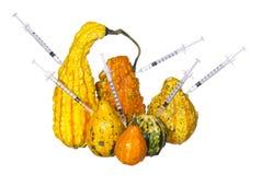 Genetiska injektioner in i isolerade pumpor. Genetiskt ändrade eller ovanligt formade squashar med injektionssprutor. Fotografering för Bildbyråer