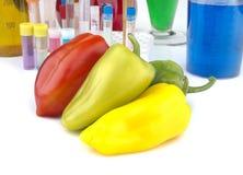 Genetiskt ändrad organism - mogna peppar och laboratoriumglasföremål Royaltyfria Foton