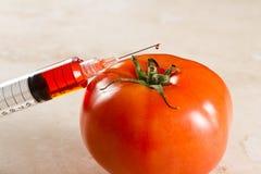 Genetiskt ändrad tomat, gmo Royaltyfri Foto