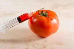 Genetiskt ändrad tomat, gmo Arkivfoton