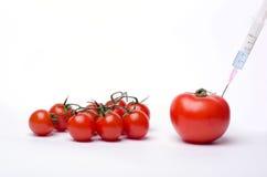 Genetiskt ändrad tomat - GMO Arkivbild