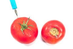 Genetiskt ändrad tomat och organisk tomat som isoleras på whi Royaltyfria Foton