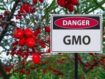 Genetiskt ändrade bär och ett tecken av faran av GMOs arkivbild