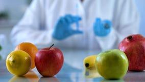 Genetyczna hodowla owoc w lab, biologia naukowiec analizuje karmową ilość obrazy royalty free