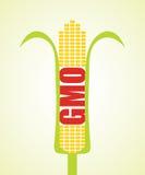 Genetycznie zmodyfikowana kukurydza Obrazy Stock