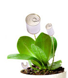 genetycznie zmodyfikowana roślina obraz royalty free