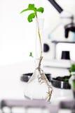Genetycznie zmodyfikowana roślina zdjęcie stock
