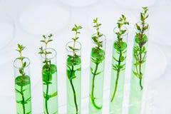 Genetycznie zmodyfikowane rośliny obrazy royalty free