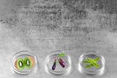 Genetycznie zmodyfikowany, owocowy, jarzynowy, testowany w Petri naczyniu obraz stock
