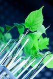 genetyczny modyfikuje rośliny obraz royalty free