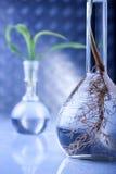 genetyczny modyfikuje rośliny Zdjęcia Royalty Free