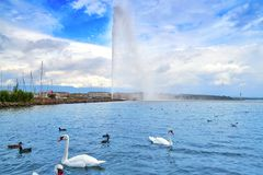 Geneva Geneve lake water Jet D`eau Switzerland. Swiss Leman Stock Image